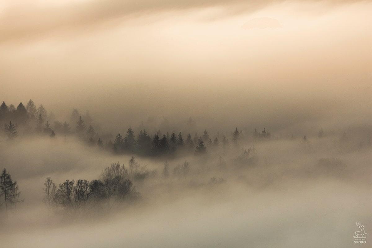 Poranne mgły nad Jelenią