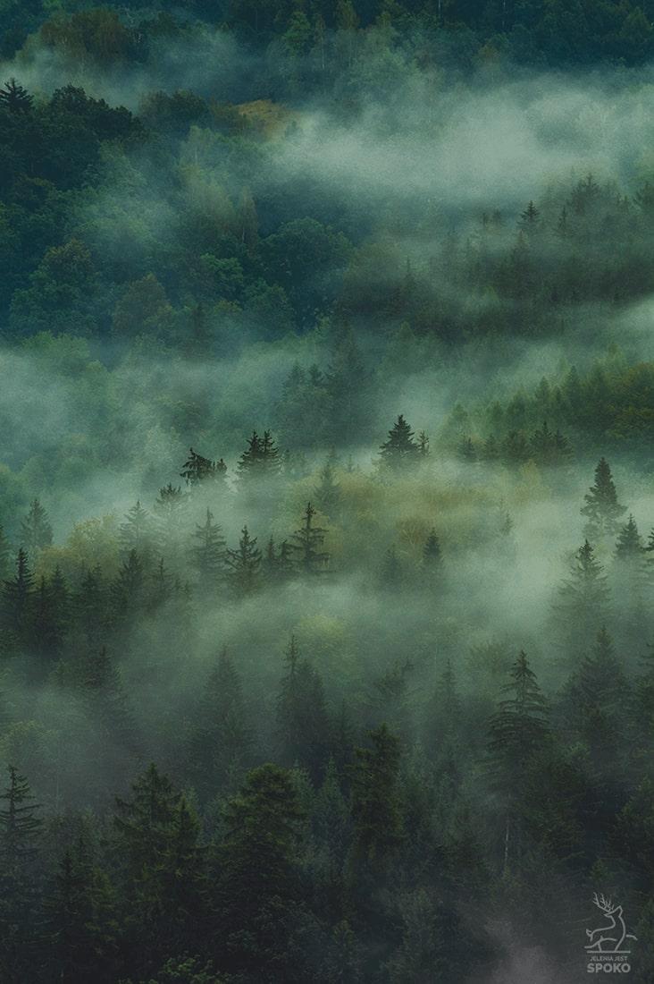 Tajemnicze Mgły