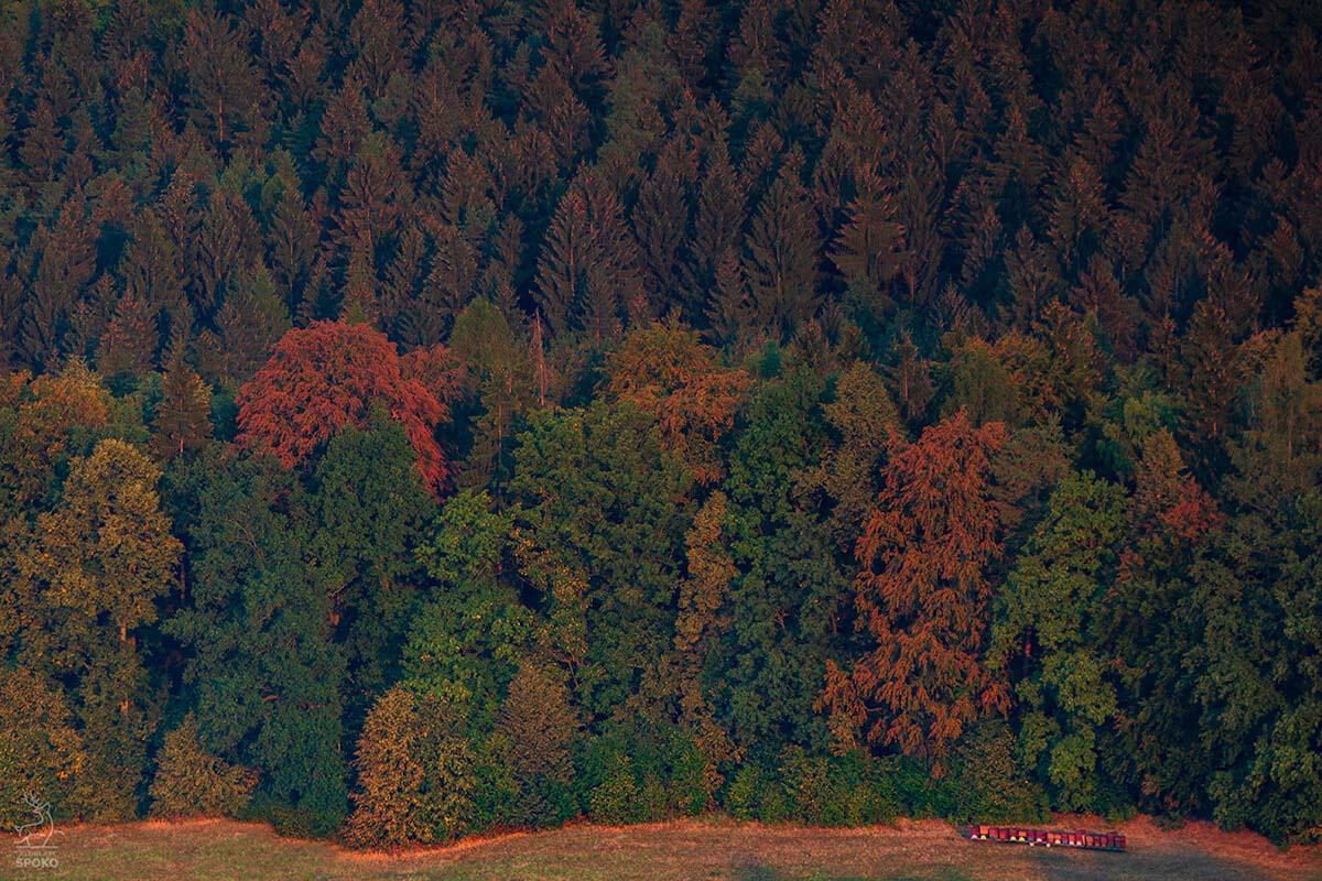 Ule w Bukowcu