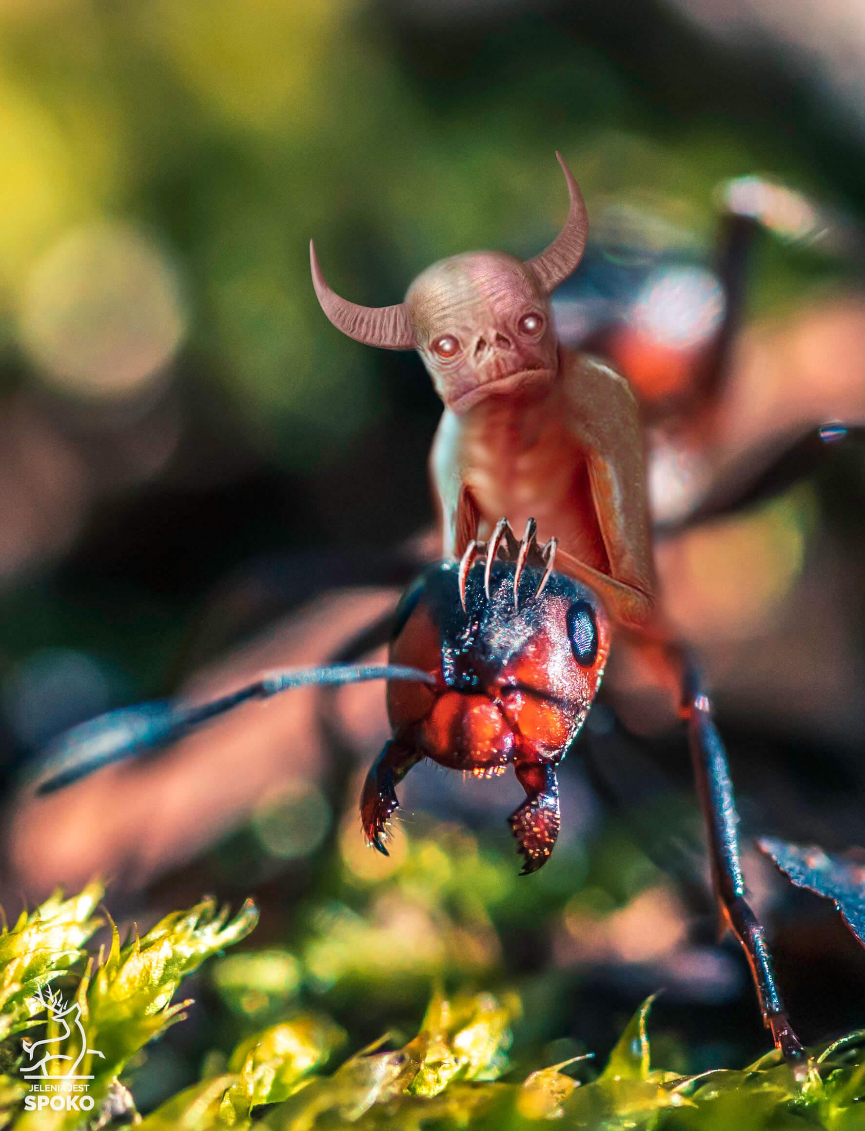 Mrowiak