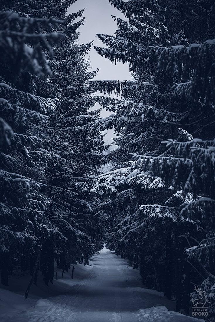 Mroczny las