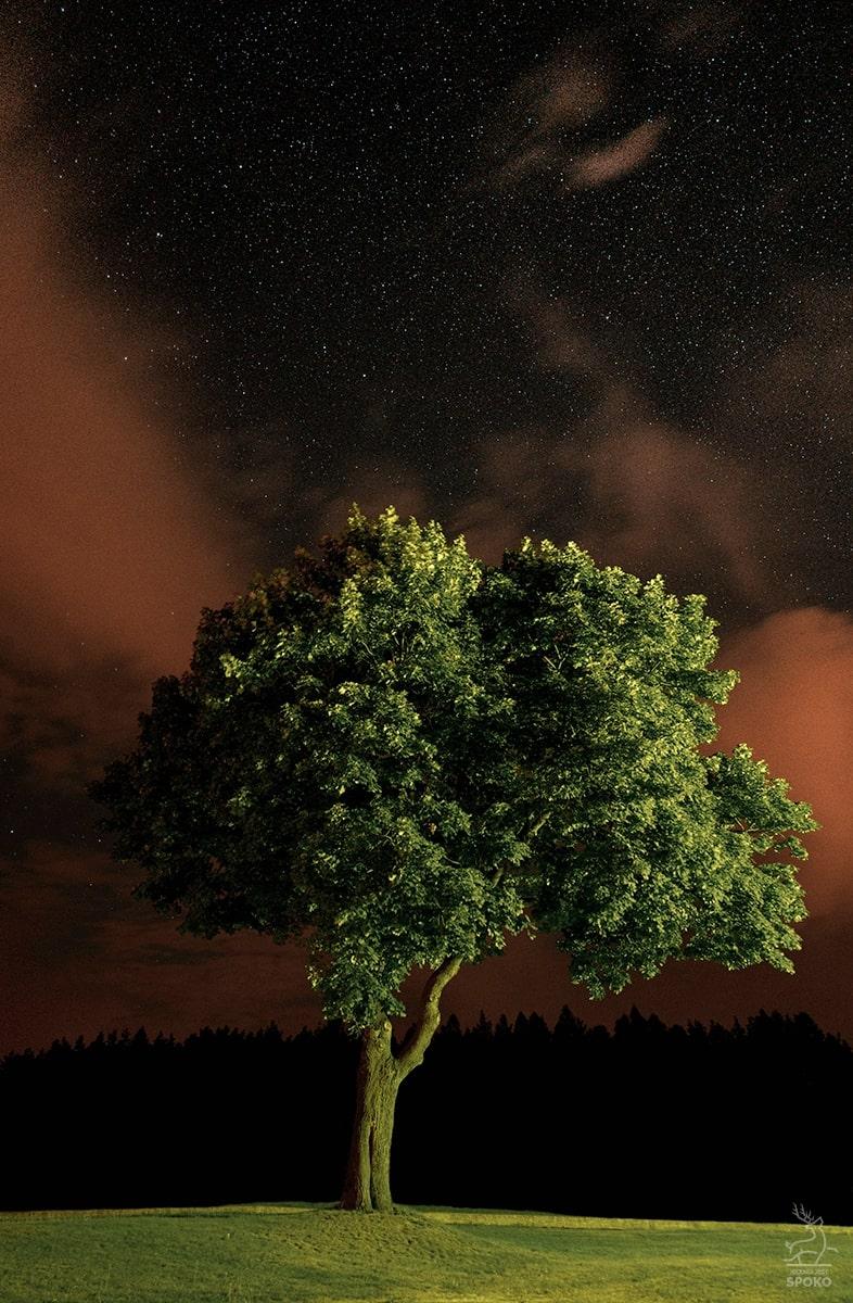 Nocny Samotnik