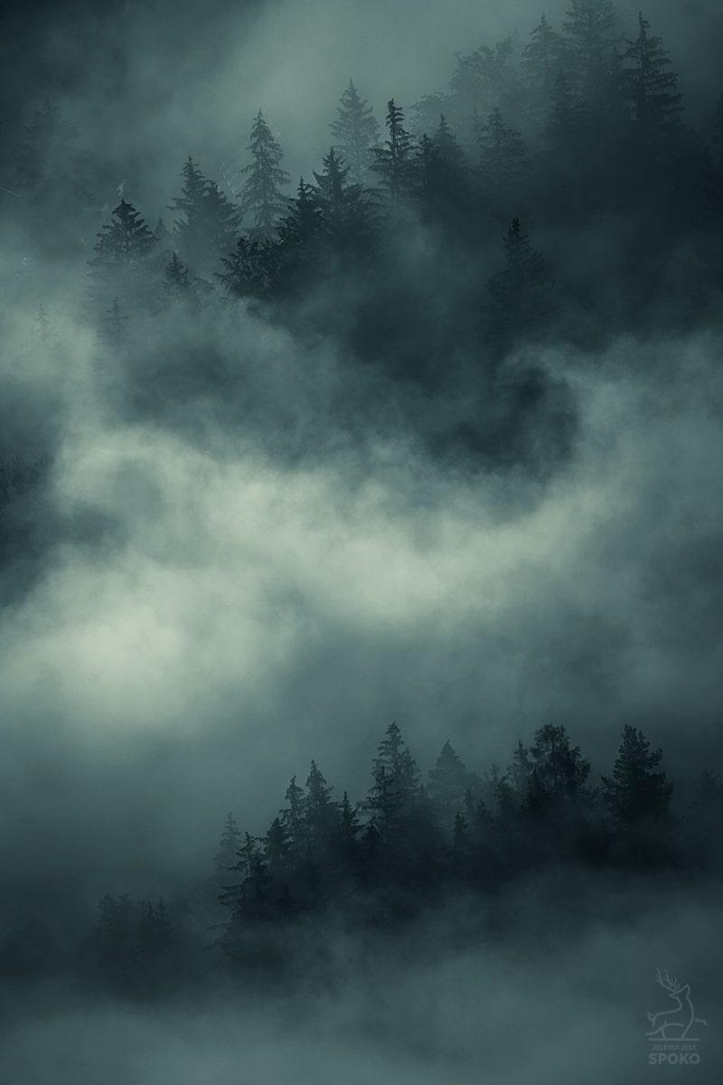 Las przesiąknięty tajemnicą