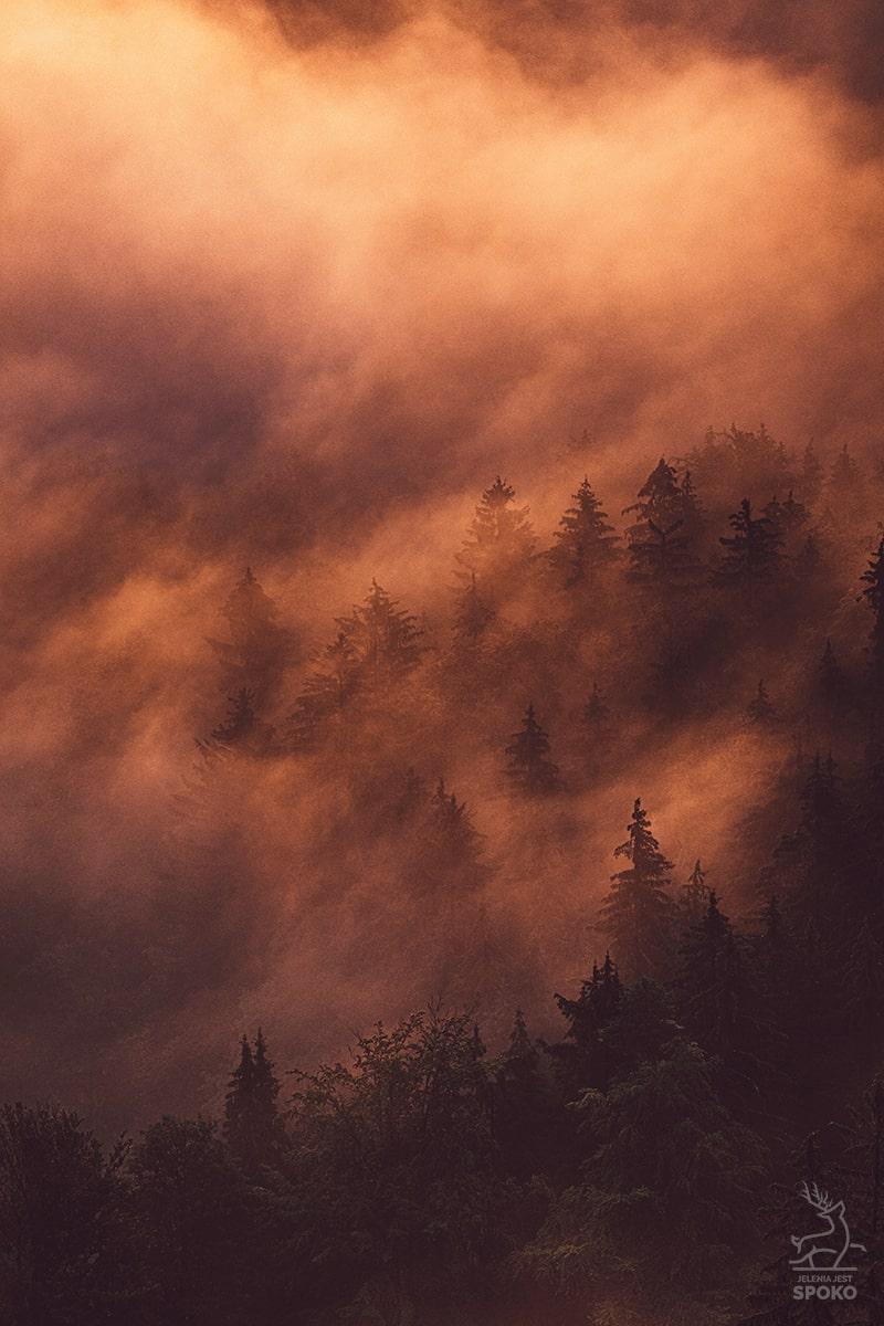 W mgielnej zawierusze