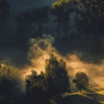 Dusza drzewa