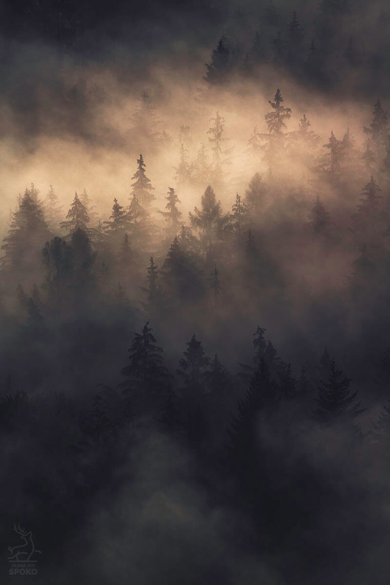 W mgielnej formalinie