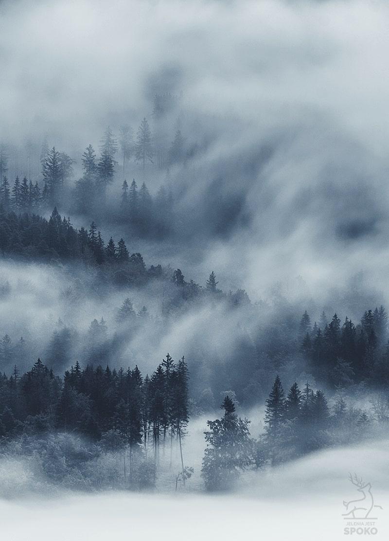 Gdy zima wśród mgieł zamieszka