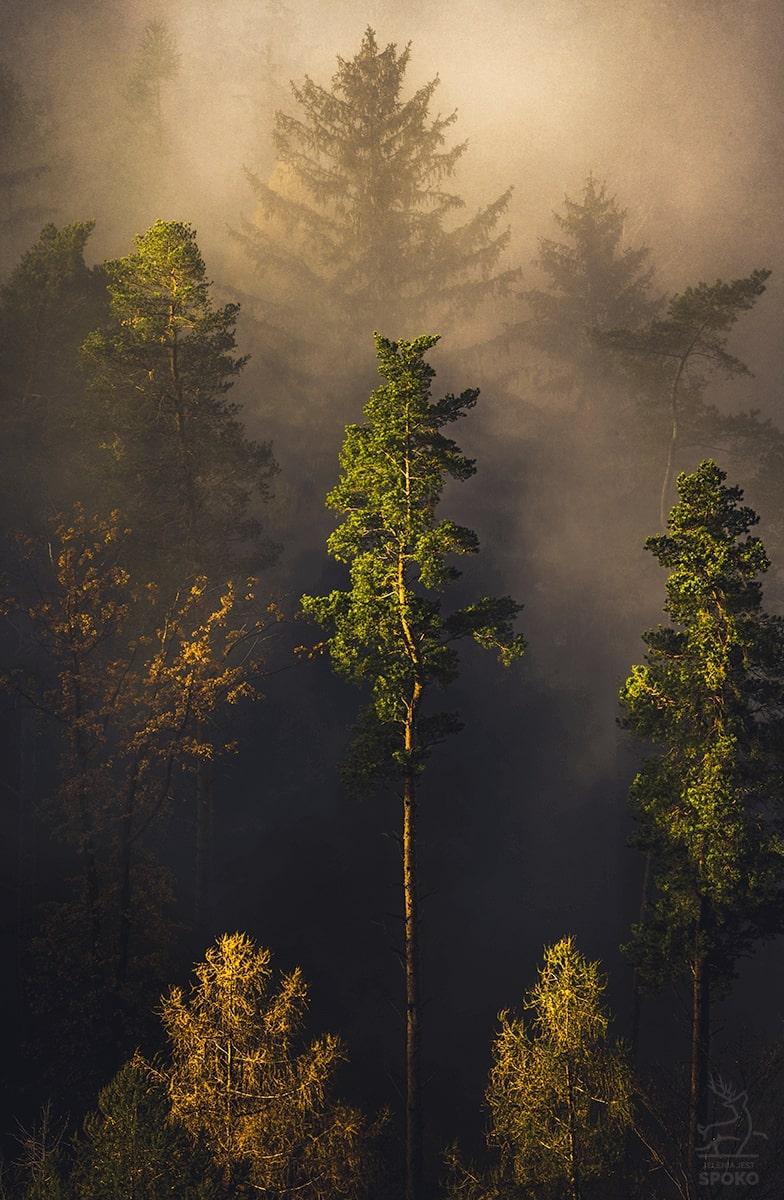 W leśnym kalejdoskopie