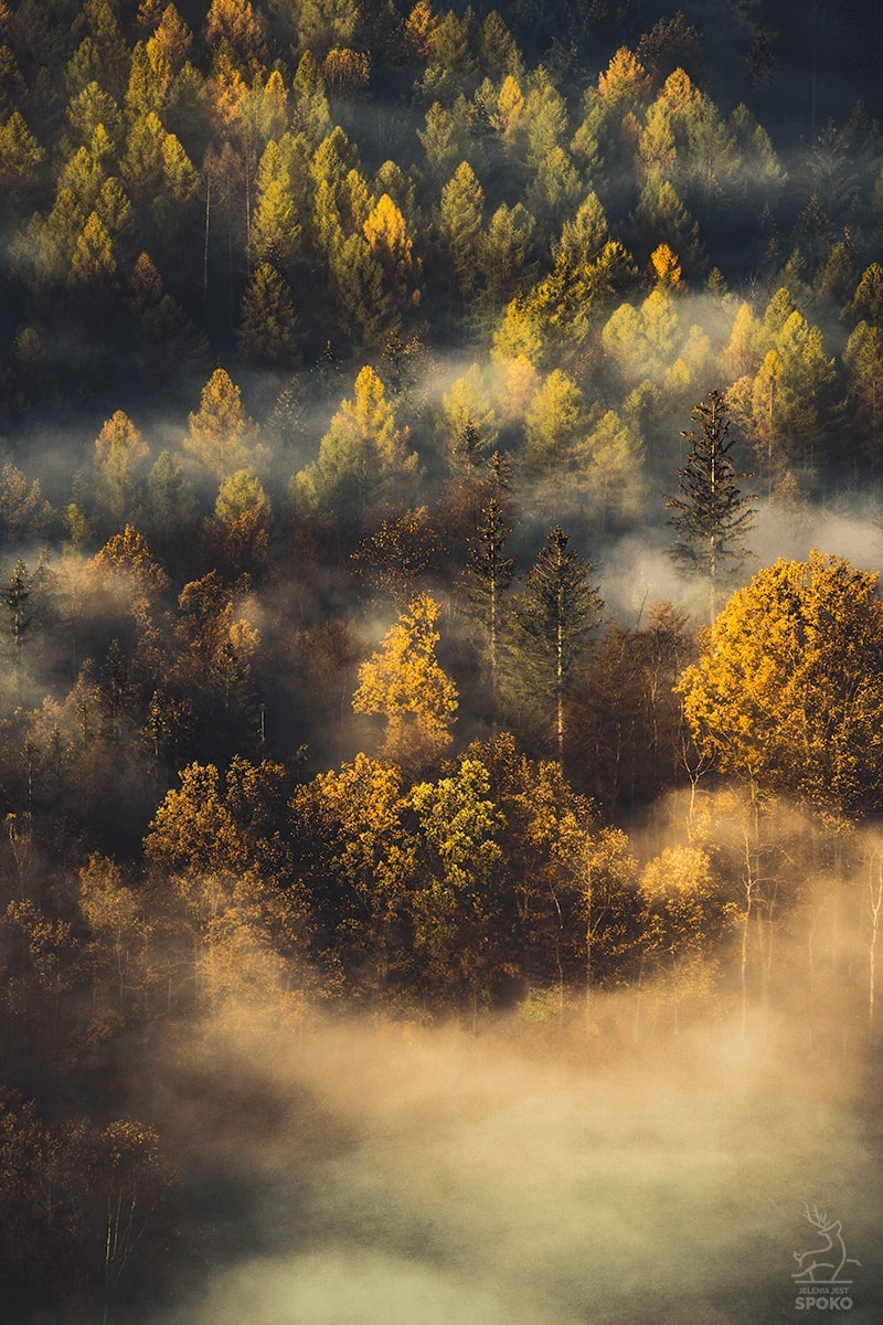 Leśny balejaż