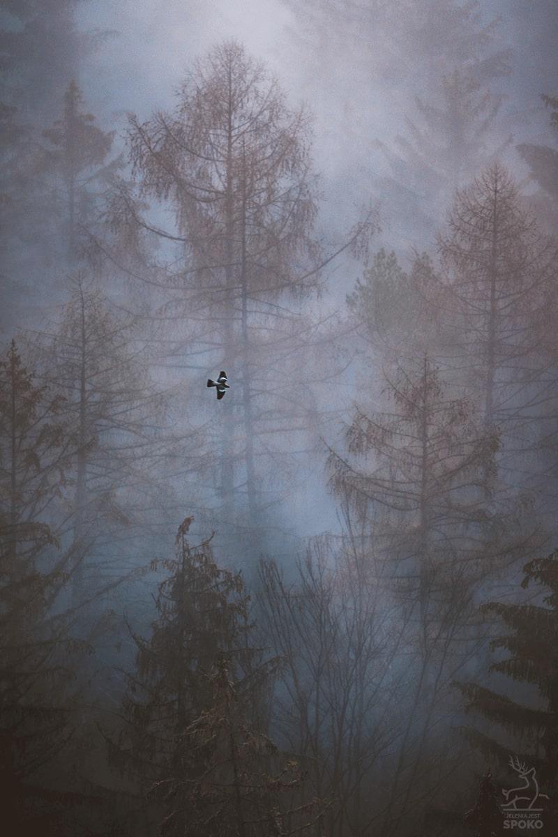 Posłaniec mgieł