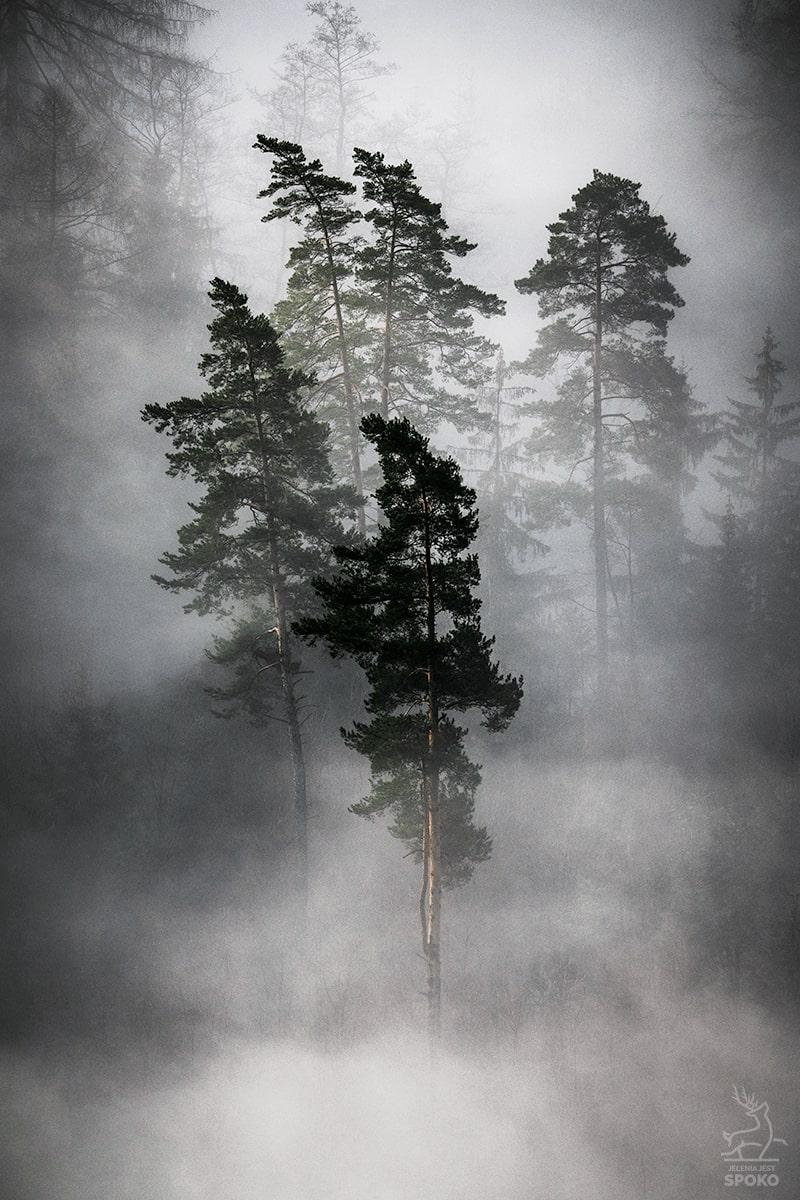 Reprezentacja lasu