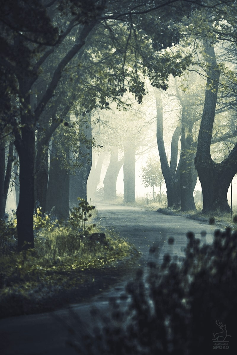 Droga do baśni