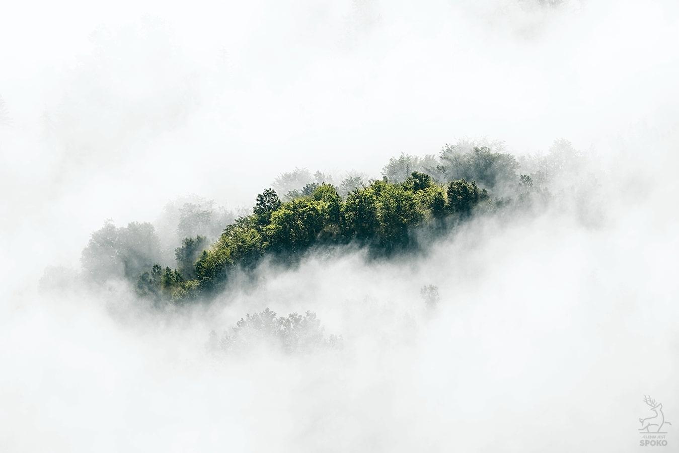 Rysa na mgle