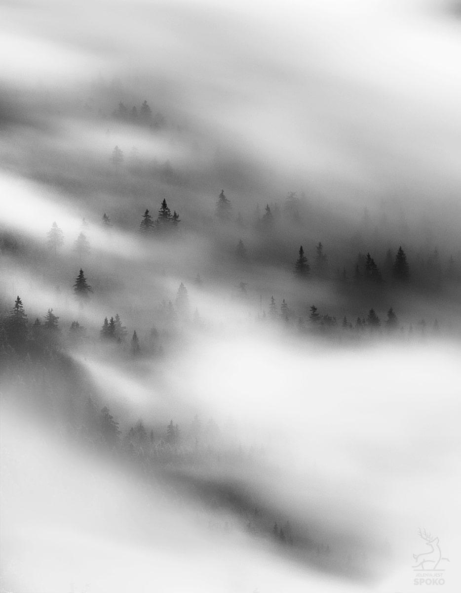 Pionki na mgielnej planszy