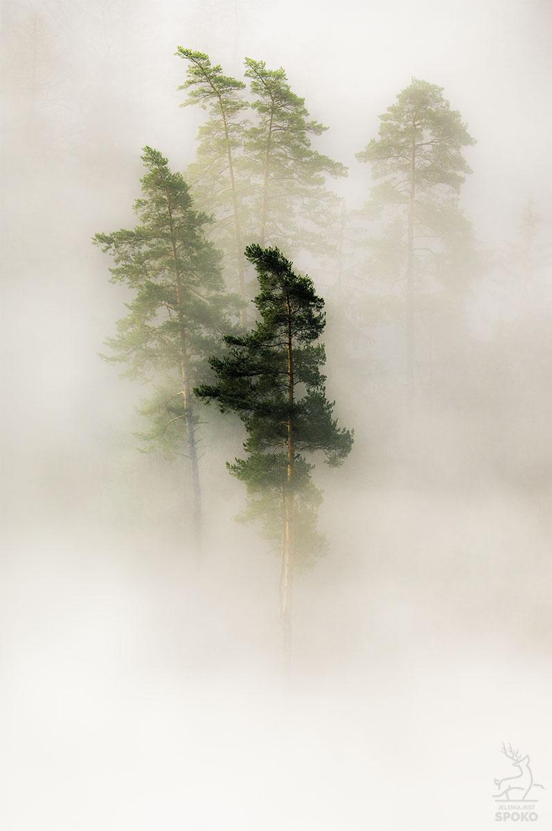 Kapłani mgły