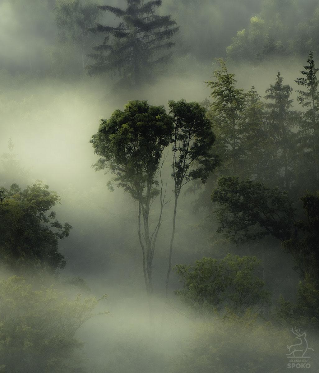 Brokuł we mgle